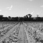 GALERIE-Vignes-NetB-Fabien-Murail
