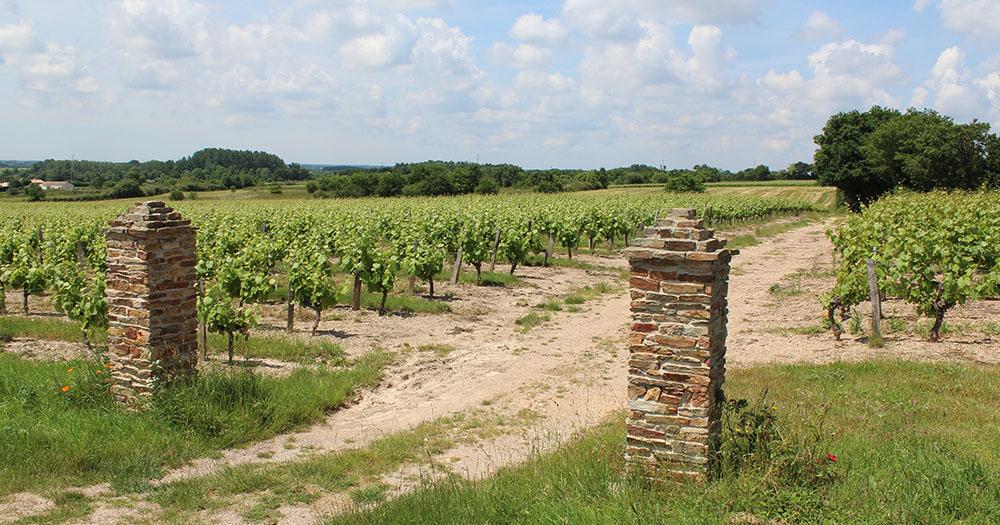 VIGNOBLE-Clos-des-Chaumes-Vin-de-Mareuil